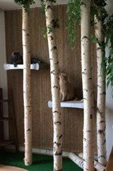 Katzenkratzbäume aus Birkenstämmen