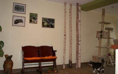 Birkenstämme für Katzenkratzbäume