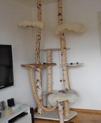 Getrocknete Birkenstämme für Katzenkratzbäume
