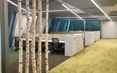 Moderne Arbeitsplätze mit Birkenstämmen