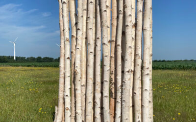 Blickdichter Raumteiler aus Birken- Birkenparavent