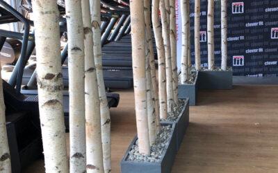 Raumteiler aus Birkenholz in großen Räumen