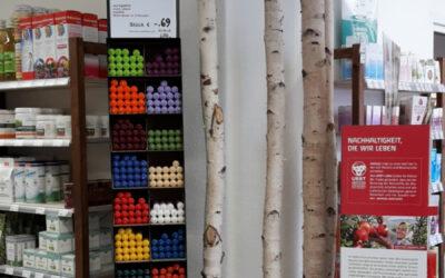 Ladendekoration mit Birkenstämmen in B-Qualität