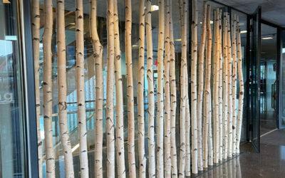 Raumteiler aus Birkenstämmen in Schweizer Schule